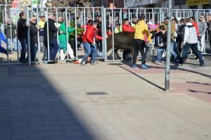 vaca escapada en bebricio dirección centro ciudad